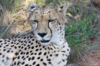 thandeka-lodge-wildlife-08