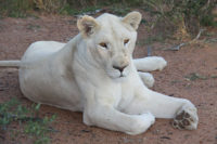 thandeka-lodge-wildlife-10